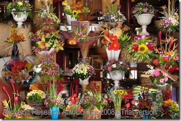 Flowers of Amsterdam collage 1